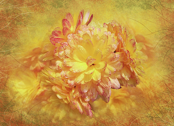 Fall Mums by Ann Lauwers